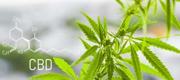 Article | Legalization is coming – A cannab...